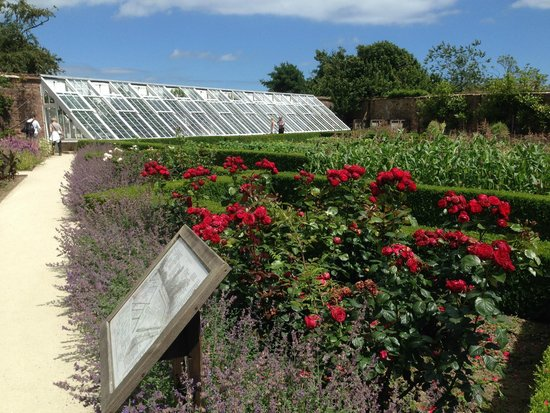 The Lost Gardens of Heligan : Rosen im Ziergarten
