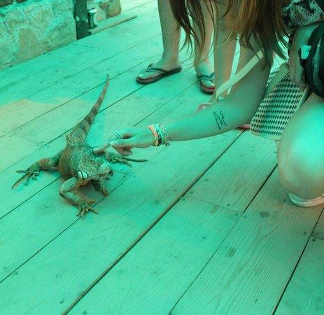 Corfu Aquarium: George