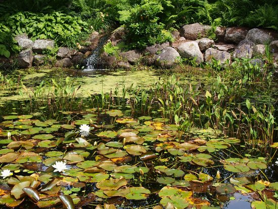 Annapolis Royal Historic Gardens: The ponds are lovely and teaming with life.