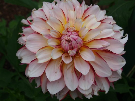 Annapolis Royal Historic Gardens: I love dahlias - the variety of flowers is amazing.
