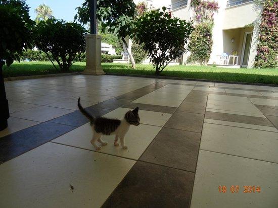 Alantur Hotel : Котенок