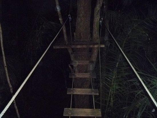 Cabanas Arvorismo: Arvorismo noturno