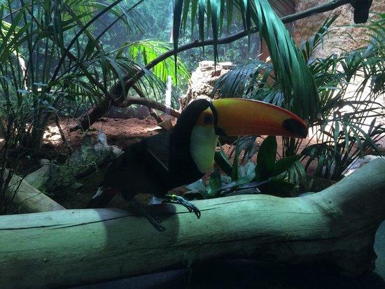 Zoo de Barcelona: Туканы любят позировать.