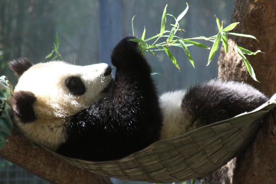 San Diego Zoo : lazy afternoon by QPO70