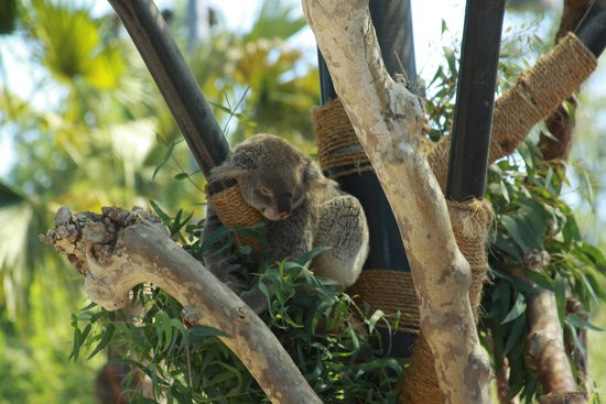 San Diego Zoo : Slow down here! by qpo70