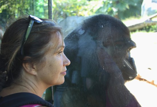San Diego Zoo : The Wife and the Ape.. by qpo70