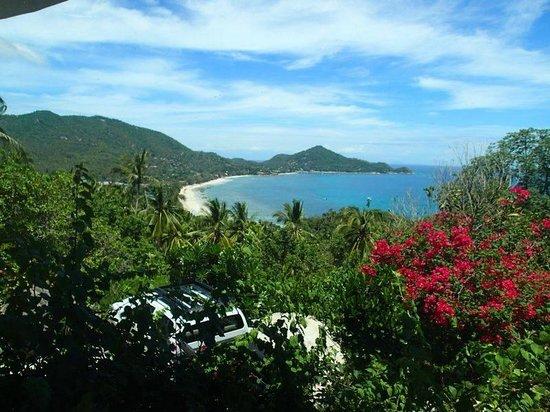 Monkey Flower Villas: View from Bougainvillea pool