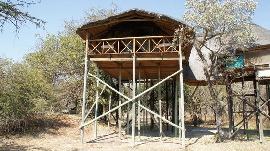 Pezulu Tree House Game Lodge : Tree House
