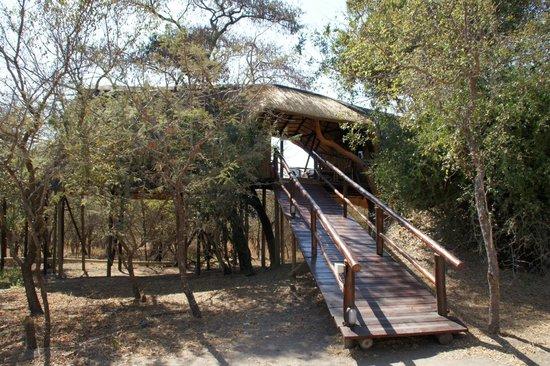Pezulu Tree House Game Lodge: Tree House
