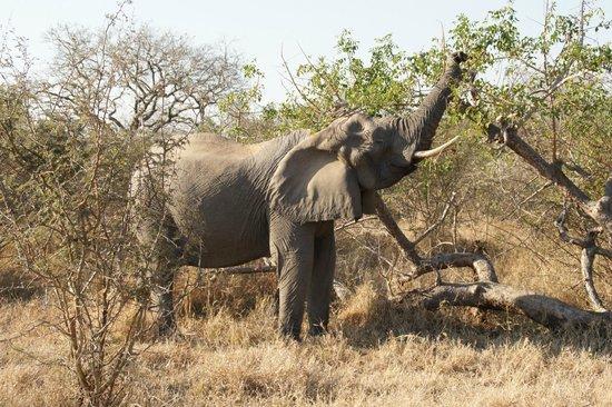Pezulu Tree House Game Lodge: Safari