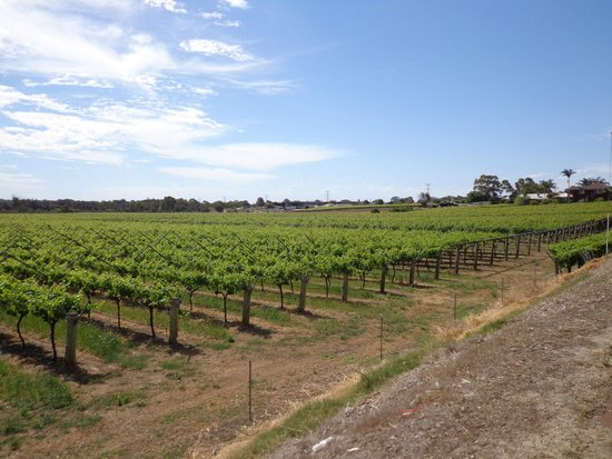 Swan Valley Perth's Valley of Taste: vineyards