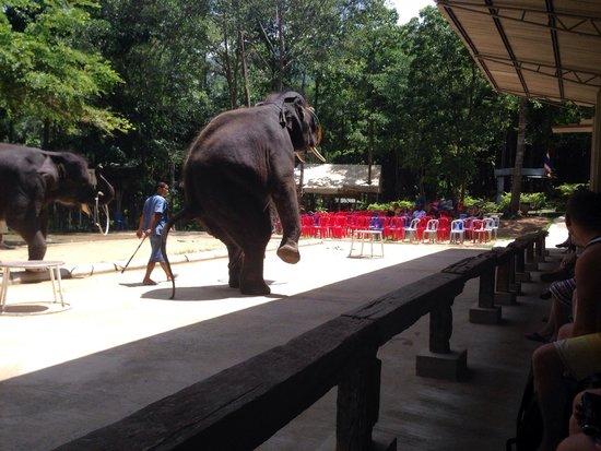 Funny Day Safari: Poor elephant show