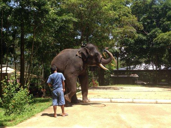 Funny Day Safari: Tired elephants