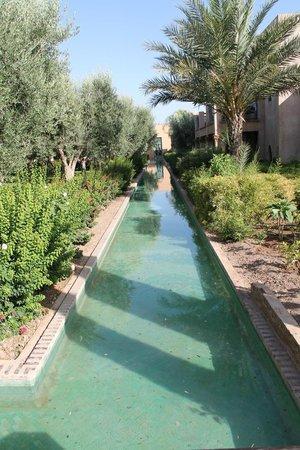 Club Med Marrakech La Palmeraie: alentours des chambres