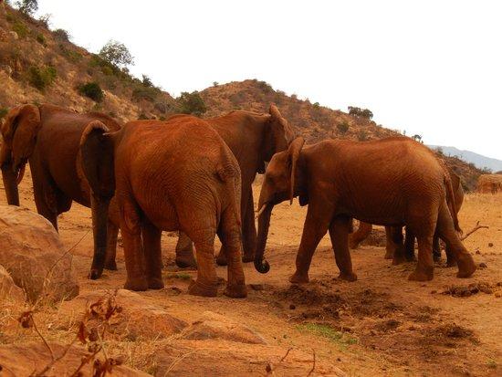 Glorious Safaris: Elephants