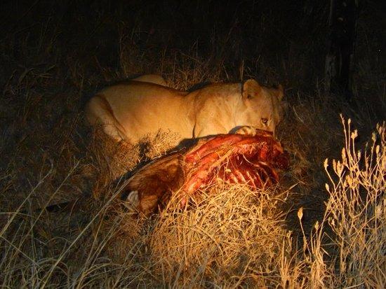 Glorious Safaris: Night safari