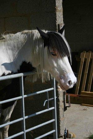 Winterborne Zelston, UK: Horses / stables