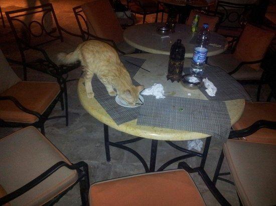 Moevenpick Resort & Spa Dead Sea: Кошка