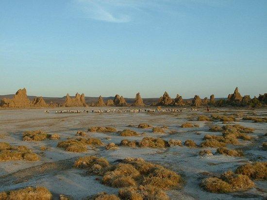 Sheraton Djibouti Hotel: Lac Abbe ou fut tourné la planète des singes