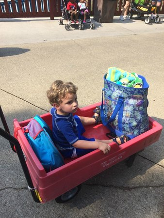 Holiday World & Splashin' Safari : Handy kid and bag carrier...