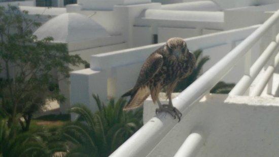 SENTIDO Le Sultan : Visitor to balcony