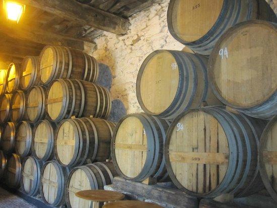 Quinta do Tedo: wine tour