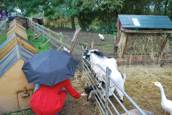 Wetheriggs Animal Rescue Centre: Lot's of animal-love ...