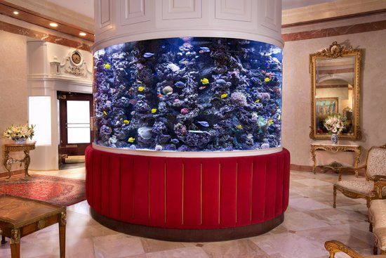 The kimberly beautiful lobby fish tank picture of the for Fish hotel tank