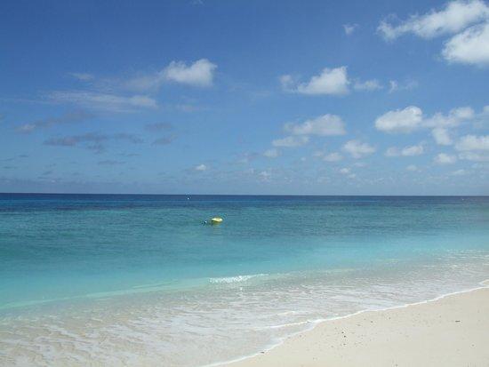 Lady Elliot Island Day Tour: きれいな海