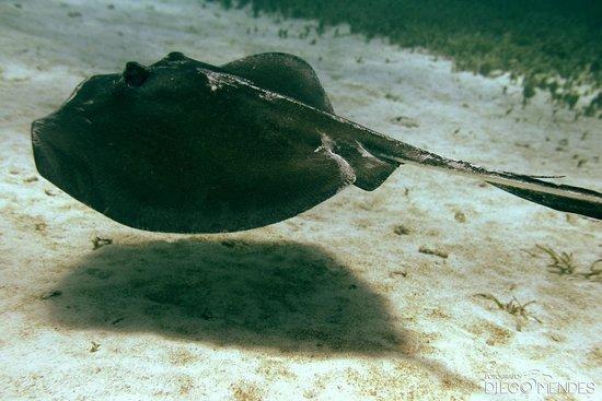 Caribe Azul: Mergulho