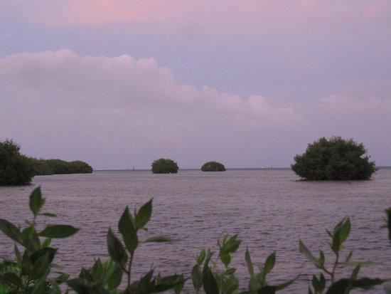 Royal Decameron Marazul: Vue sur la mangrove depuis La Terraza
