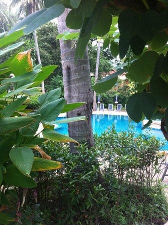 Fair House Beach Resort & Hotel : бассейн окружен тропической зеленью