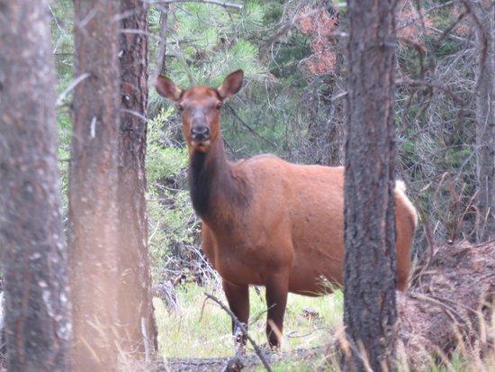 Triple Creek Ranch : Elk on trail behind TCR