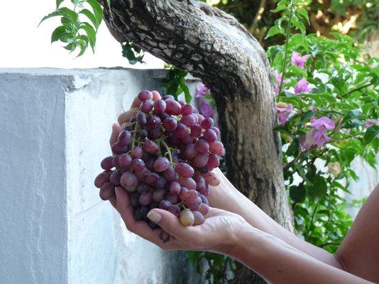 Mary Christina : un bel grappolo d'uva