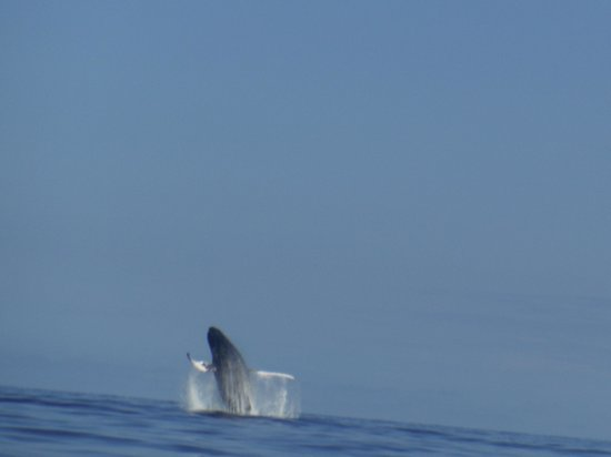 Ultimate Whale Watch : Amazing Whale