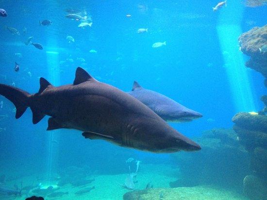 Palma Aquarium: Sharks!