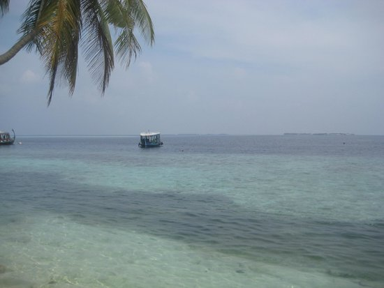 Biyadhoo Island Resort: Темное пятно- это косяк рыб)))