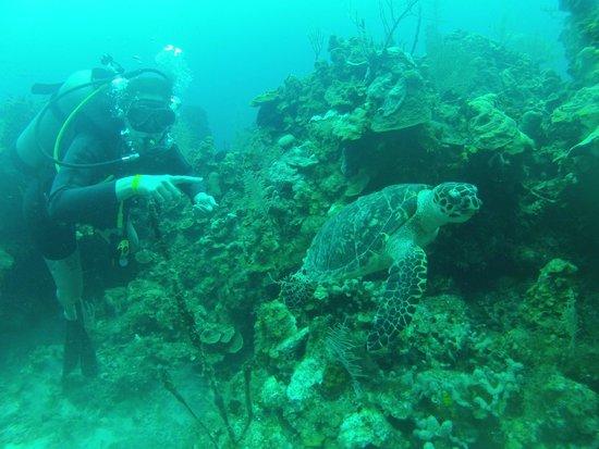 West Bay Divers : 4 turtles on 1 dive!  Amaaaaaazing!