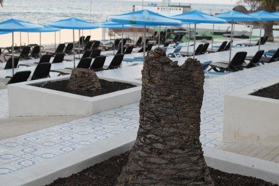 Alborada Beach Club: The Palm Trees by the pool