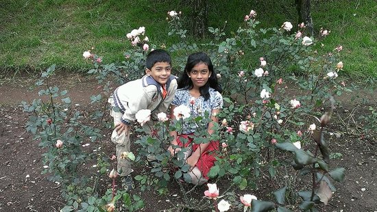Rose Garden: Little flowers, tiny flowers