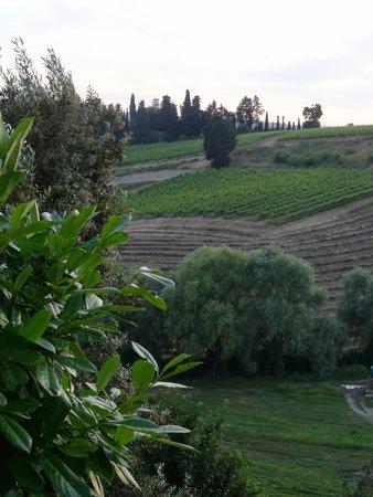 Tenuta Mormoraia: The grounds...