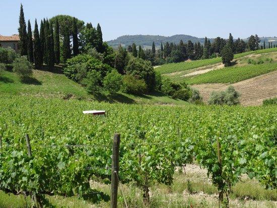 Tenuta Mormoraia: Over the vineyards...