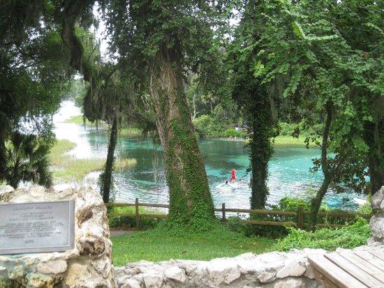 Rainbow Springs State Park: head springs