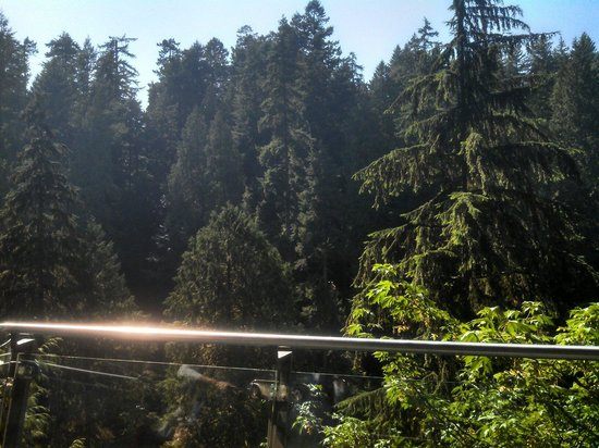 Capilano Suspension Bridge und Park: This is at the lookout area on this side of the bridge