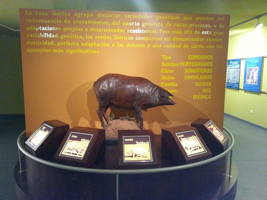 Museo del Jamon: Distintas razas de cerdo iberico