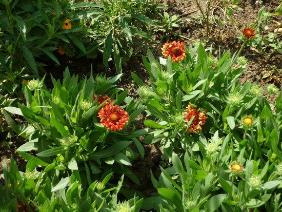 Jardin des plantes fotograf a de jardin des plantes for Jardin des plantes orchidees 2016