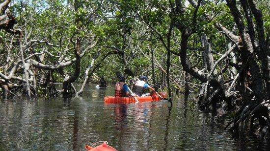 El Rio y Mar Resort : Kayaking at the mangroves