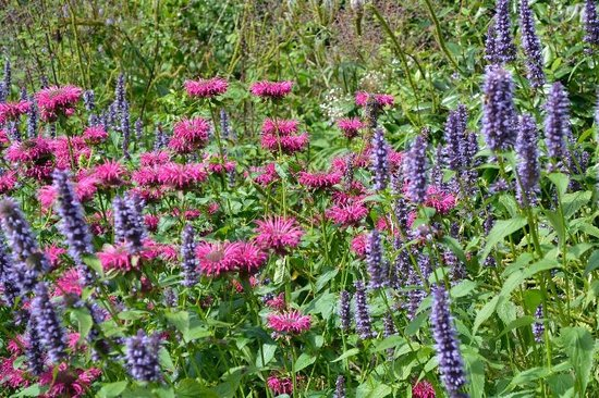 RHS Garden Harlow Carr: Pink and Blue