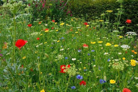 RHS Garden Harlow Carr: Wildflowers