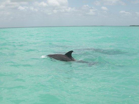 Sian Ka'an Biosphere Reserve : Delfino
